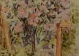 The Oleander